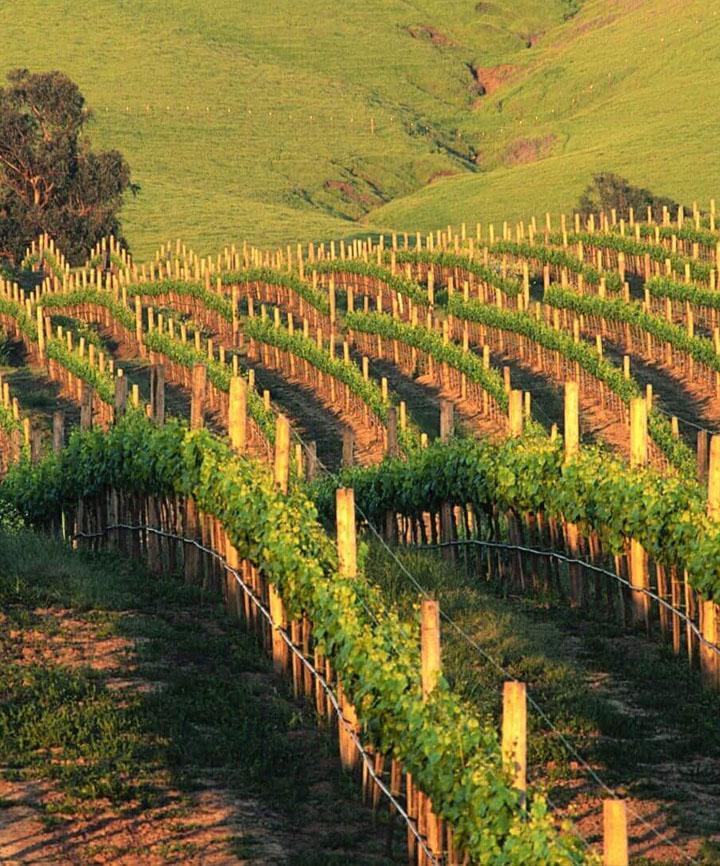 Hevron Heights Winery